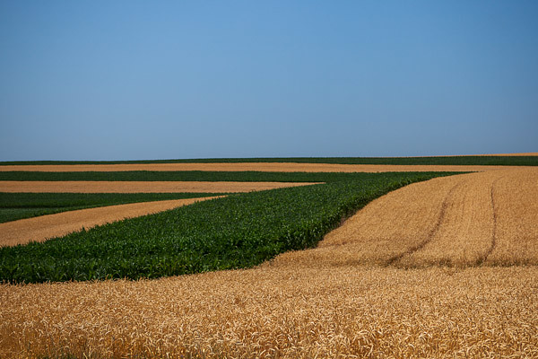 Converging Fields - Iowa County, Wisconsin