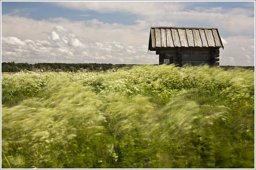 20120617. Pärnumaa. Häädemeeste coastal meadows. Wind painting. 1973. by Tiina Gill
