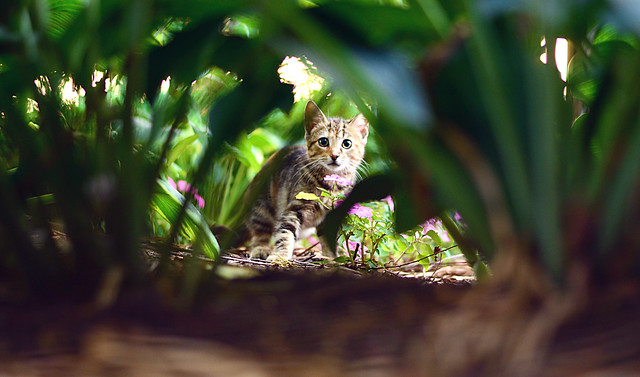 The Jungle Creature