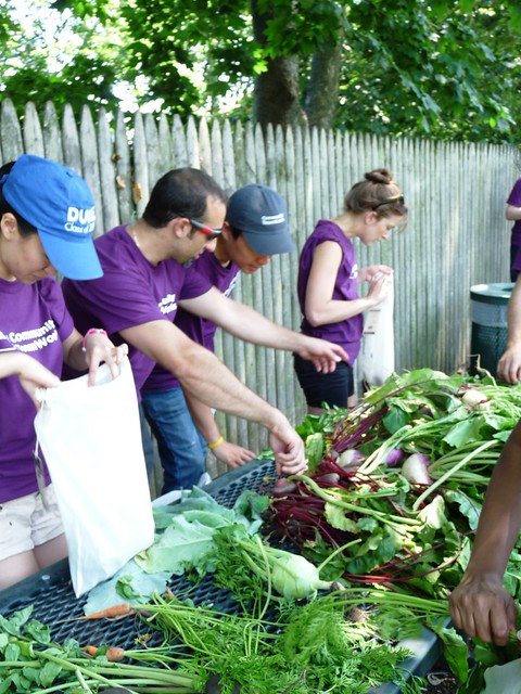 Volunteers sort and bag the harvest. Photo by Kathryn Littlefield.