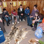Wolf Education Program