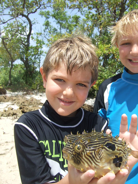 Koen with a striped burrfish