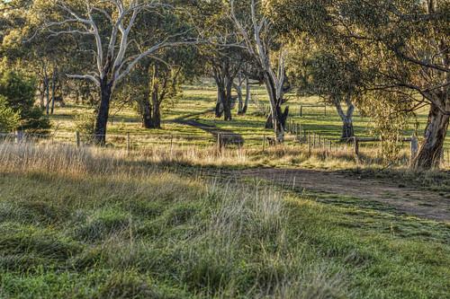 Woodlands walk 2012-07-14 (_MG_0912)