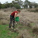 Helen having a ball picking weed cotton by stitchingbushwalker
