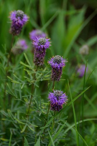 Wildflowers_9818.jpg
