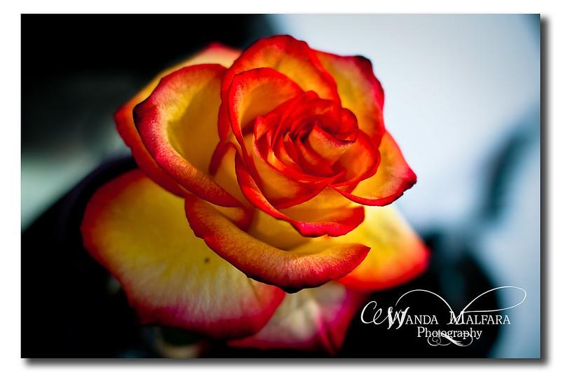 Flowers 052 wm