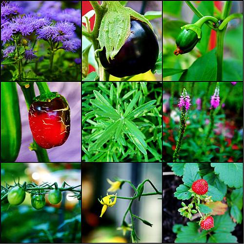gardencollage2012