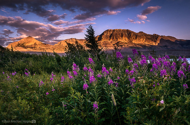 Flowers and Alpineglow in Glacier NP