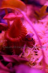 最佳led食蟲植物照明燈