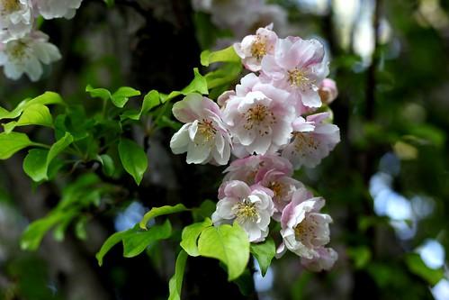 It's a Bloomin' Tree 1