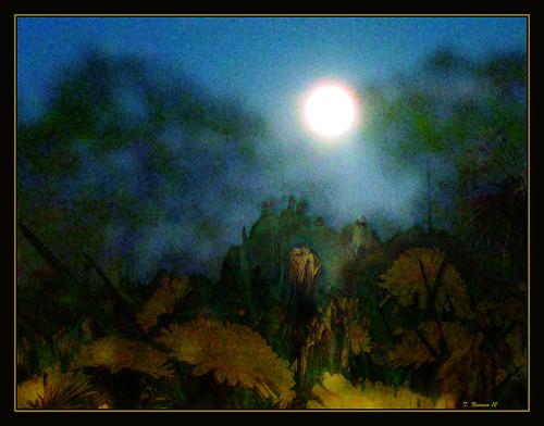 Moon Dandelions