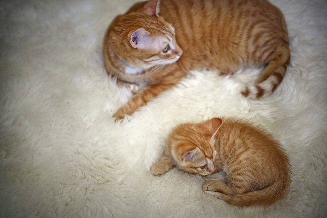 Mini Me | Cat photography