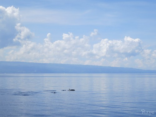Dolphin watching in Bais, Negros, Philippines