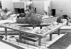 Elevated Desert at Mesa Community College