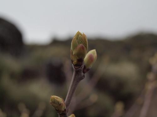 Promessas de Primavera #2 by MauFeitio