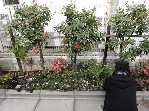 2012-6-2ビオトープガーデン実習-9