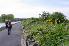 along the Royal Canal, Dublin