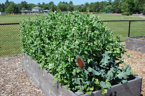 Franklin, MA: Community Garden
