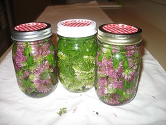 Red Clover and Yarrow Tincture