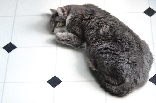 Roxy rug