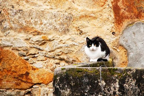 Cat by Paulo Veiga Photo