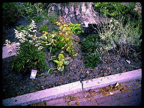 guerilla gardening.