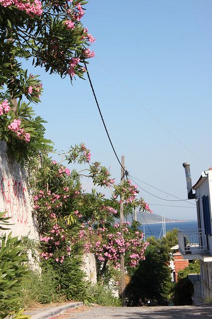 Kreikka, Samos 2012 045
