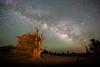 Stars Over Star Dust by Jeffrey Sullivan