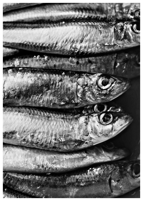 sardines© by Haalo