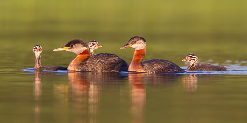 Redneck Family Swim by Jeff Dyck