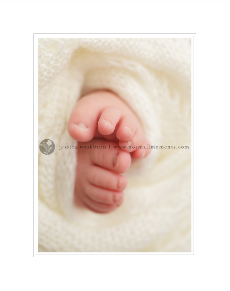 Albany newborn photography