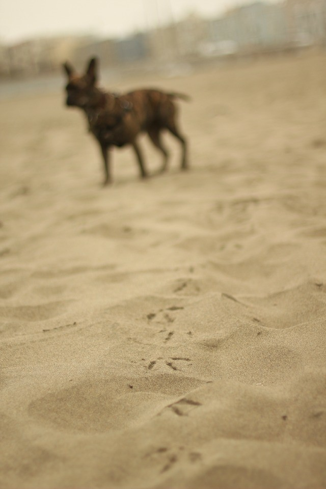 beach zz blur