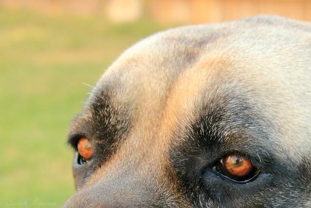 Murphy eyes.