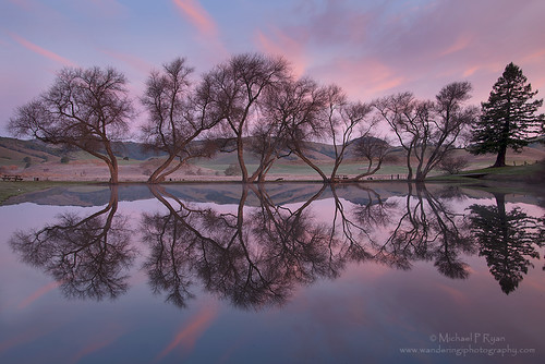 california trees reflection cheese sunrise photography michael pond factory ryan marin petaluma marinmagazine michaelpryan wanderingiphotography michaelryanphotography