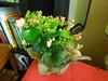 les plantes chez nous