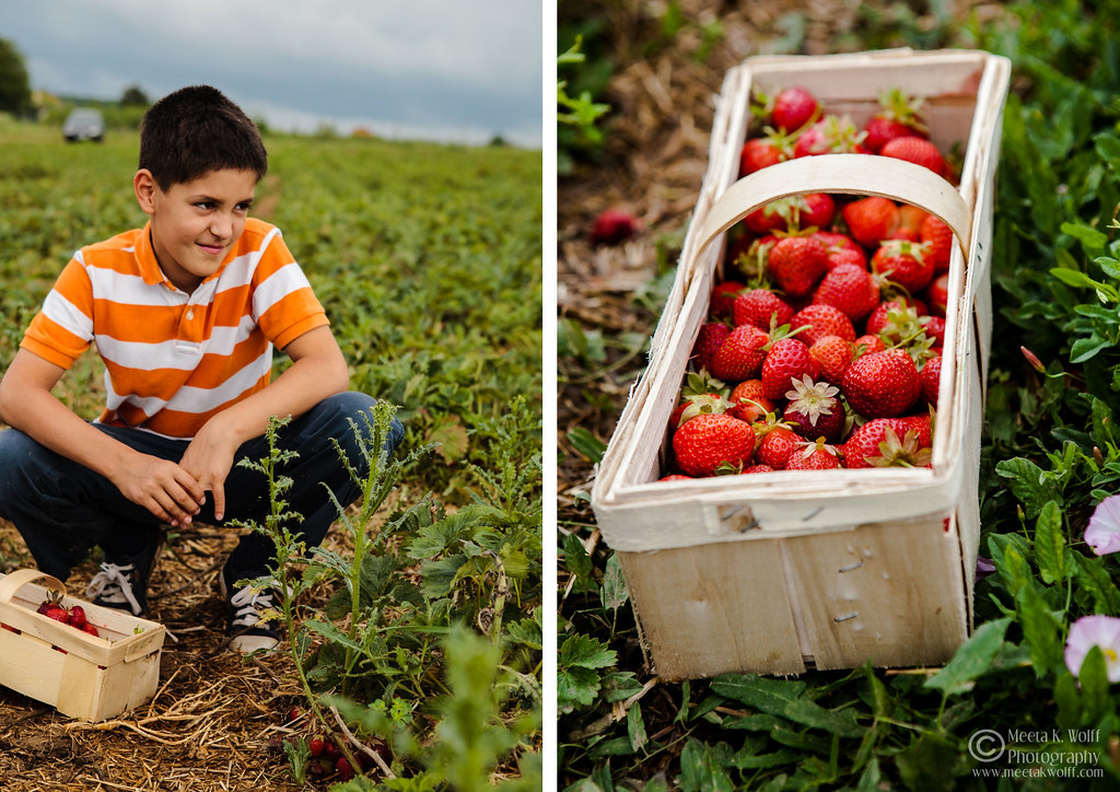 Diptych Strawberry Fields 3 by Meeta K. Wolff