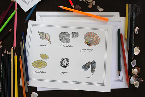 seashell printable coloring sheets and colored pencils