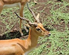 2012-07-15 Pune Zoo 19