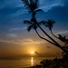 Palm Sunset by ManchegoP.R