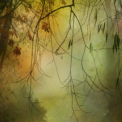 Foggy Willows and Horse Chestnuts