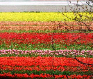 colored field