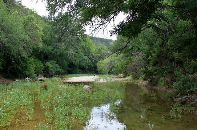 Austin barton creek greenbelt flickr photo sharing for Barton creek nursery