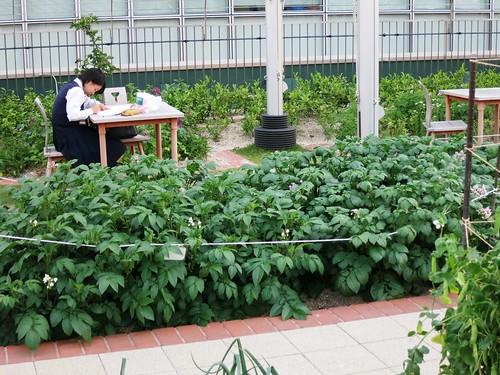 Osaka / rooftop urban garden