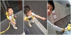 とらちゃん、今朝のお散歩 (2012/6/14)