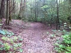 Mountaintown Creek Trail