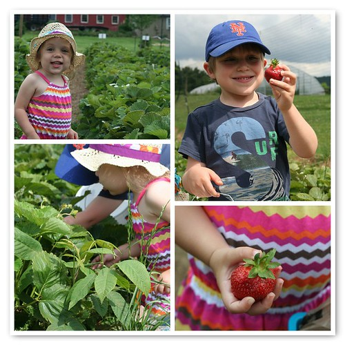 foodie tots at Wegmeyer Farms, Va.