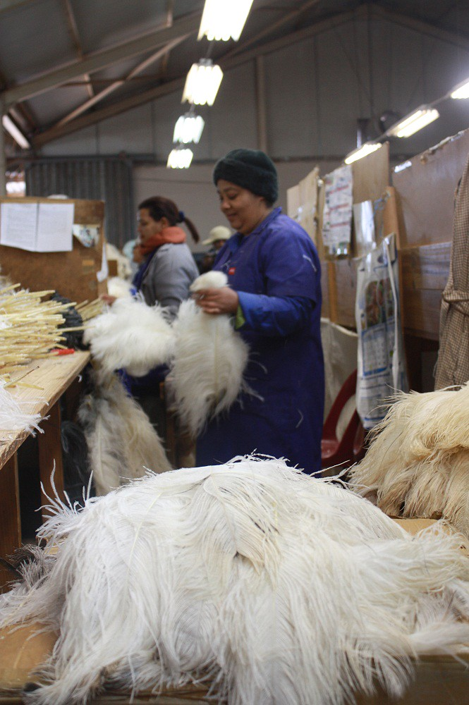 Workers at an ostrich feather factory in Oudtshoorn
