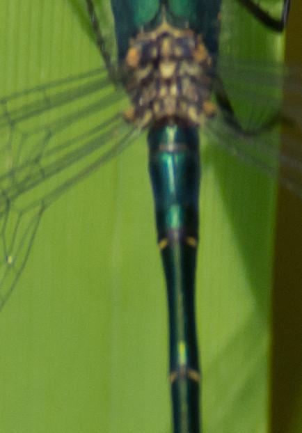 emerald s2