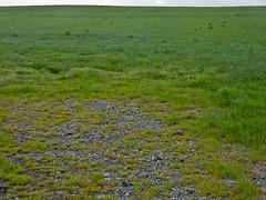 Landscape Project 1-2.jpg