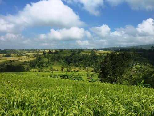 Bali-Route Legian-Jatiluwih (38)